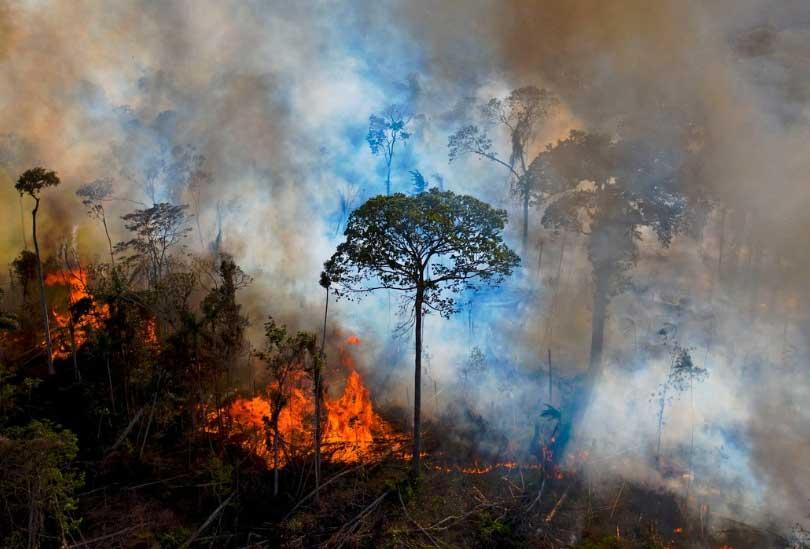 ビジネスと人権カフェ「アマゾンはなぜ燃えているか?私たちができること!/Why is the Amazon burning? What we all can do stop it!」